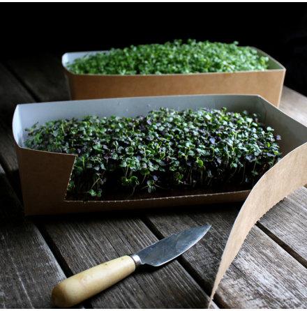 Förpackning - Kartong Mikrogrönt